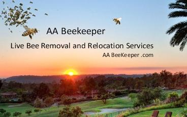 San Diego Bee Removal, SD BeeKeeper Bee Removal ​ an Eco-Friendly bee removal service