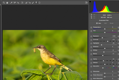 Bird photography and image editing