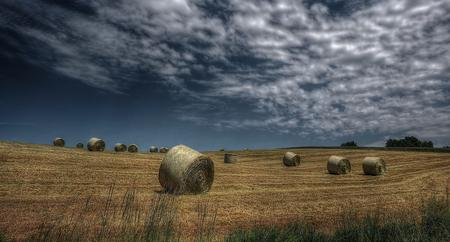 Landscape of hay field with bales of hay