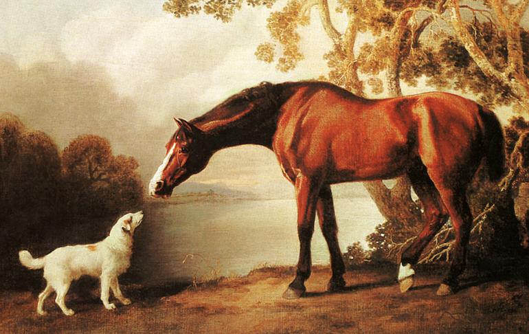 About Horse 'n Hound PT