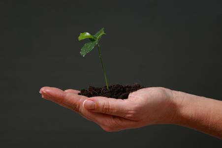 image of a seedling growing, held in a person's palm