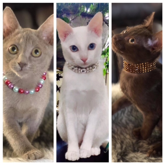 Kitties for Sale Now