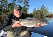 speckled seatrout
