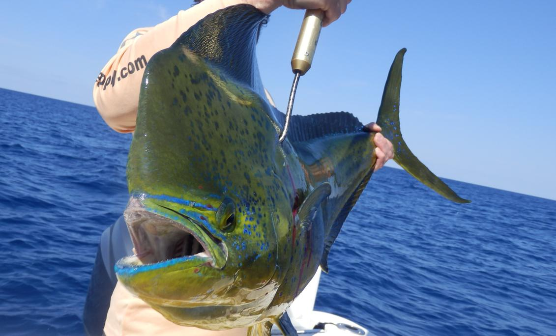 Texas Gulf Coast Dorado Epic Charters Unlimited