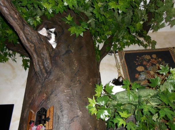 Extra Large Cat Trees