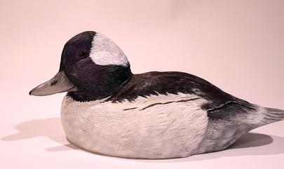Buffle Head Drake Duck Carving