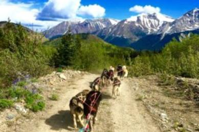 This private tour option out of Skagway Alaska takes you to Michelle Phillip's dog mushing camp near Tutshi Lake in the Yukon