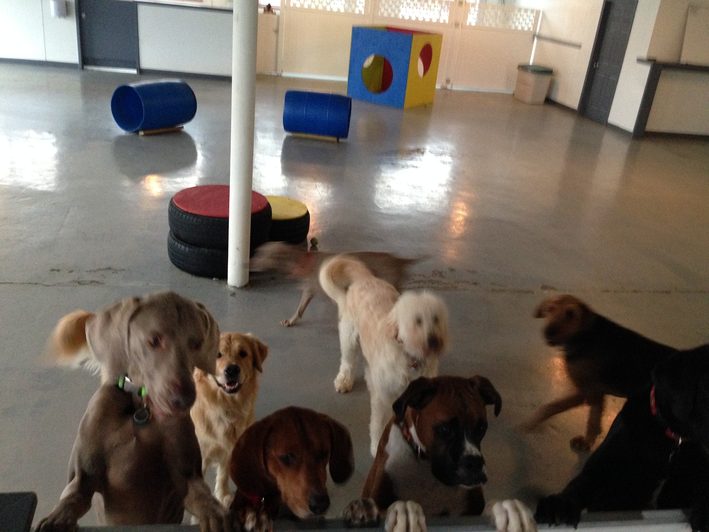 Dog Day Care Milwaukee