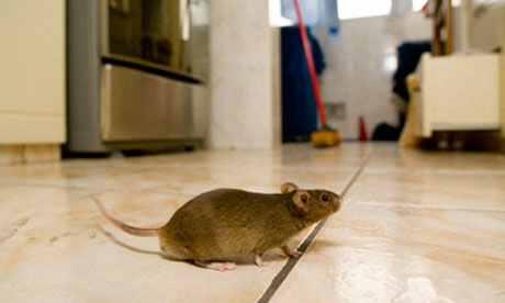Mice Control Inside and Outside