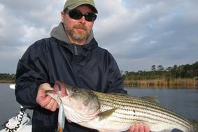 striped bass top water