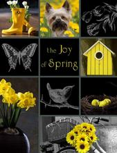 The Joy of Spring Fundraiser