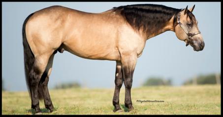 dual horse spark roping stallions semen frozen csr