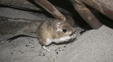 Rodent Pest Control Virginia Beach