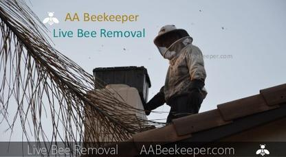 Chula Vista Bee Removal Services Beekeeper Chula Vista