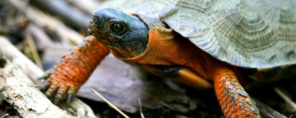 Mid-atlantic Turtle & Tortoise Society - Online