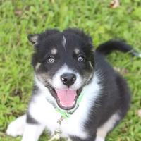 Agility Dog Training Waukesha Wi