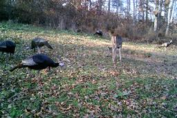 turkey season ky