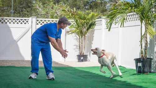 dog playing boarding angel animal hospital