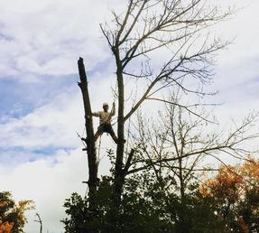 Dead Ash Tree Removal, Located in Stoney Creek, Ontario, Residential Tree Services,