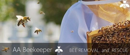 Bee Removal Orange County - AA Beekeeper