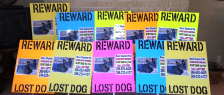 PET PI Lost Pet Fluorescent posters for Intersection Alert