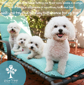 Pawtree Pet Products