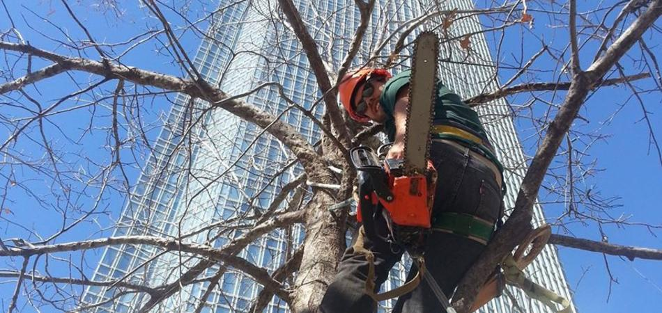 tree trimming okc