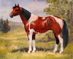 Paint horse gelding portrait conformation