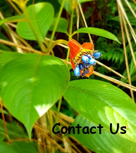 A red and blue flower shines among green leaves in the Belize rain forest. Contact us, one of the best Hotels in Belize District.