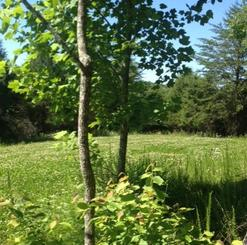 clover food plot