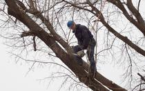 Simply Tree Care Omaha Tree Services Team
