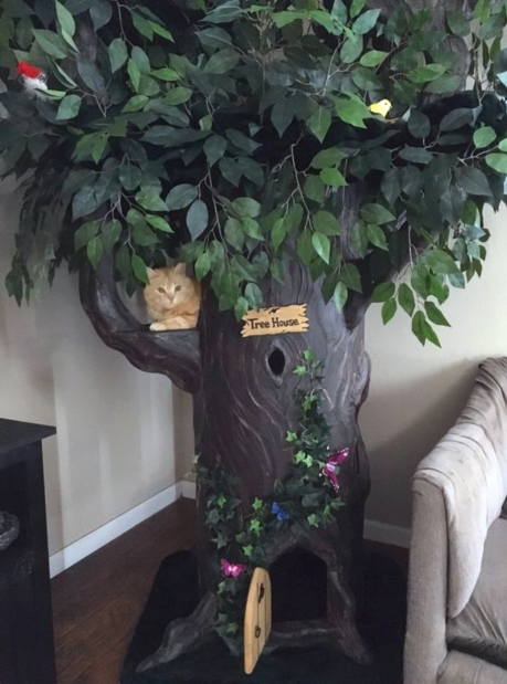 Amazing Cat Trees
