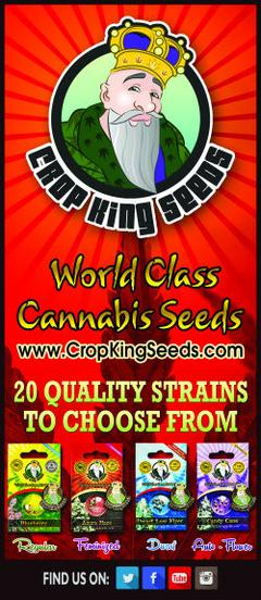 Crop KingSeeds - Time 4 Hemp