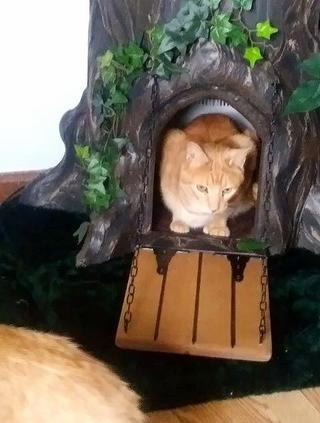 Custom Cat Trees