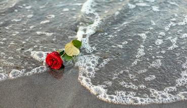 Cremation Services By The Sea in Boca Raton Florida