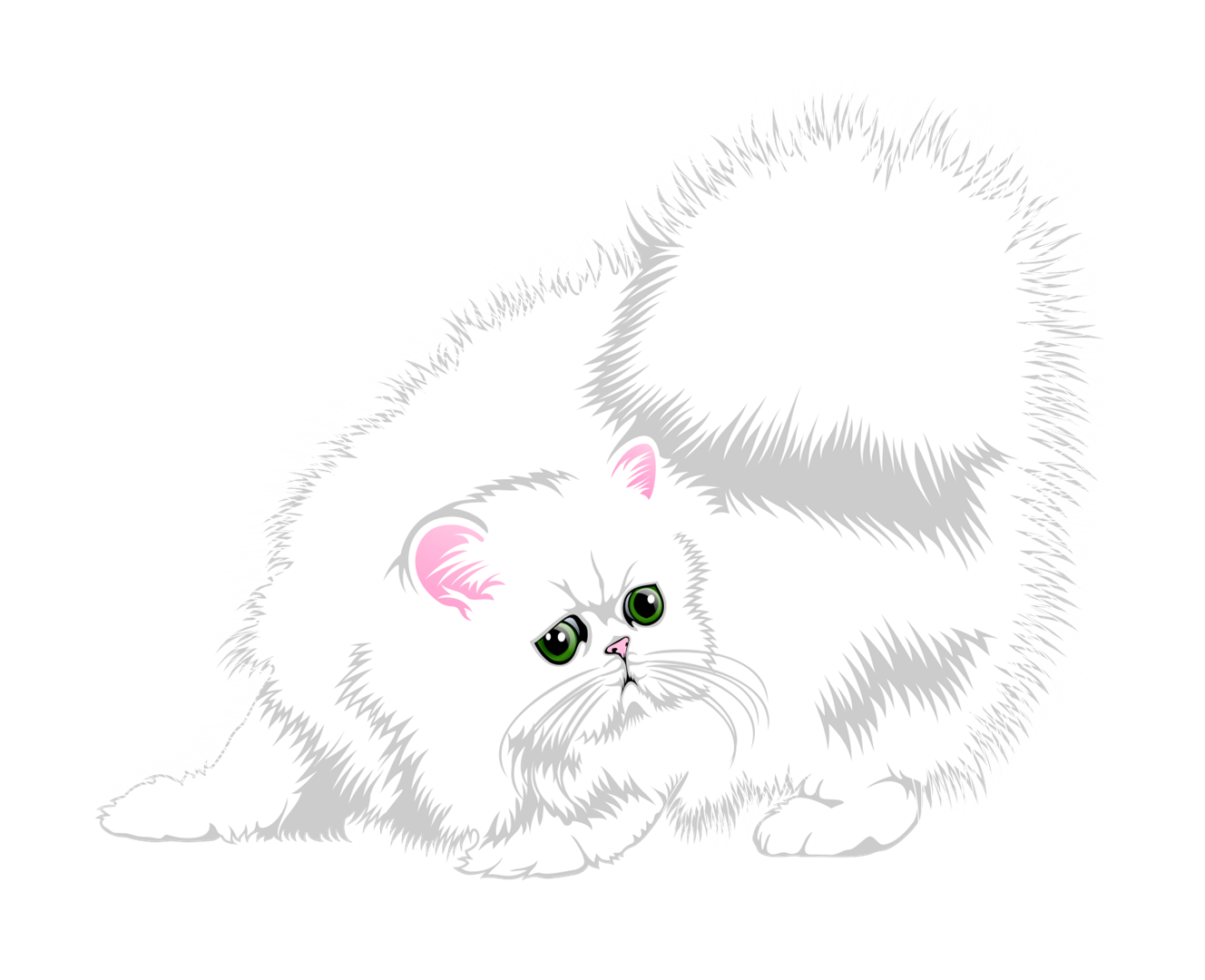 Teacup Persian Kittens For Sale in Texas, CFA Pet Silver