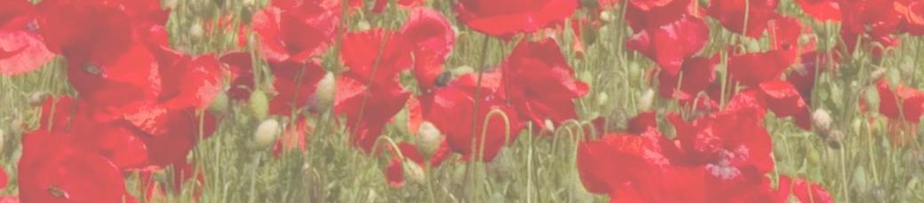 Poppy mightylinksfo