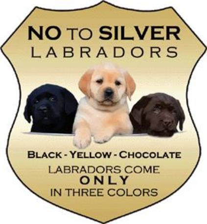 Labrador Retriever Club of Alberta - Labrador Breeders, Ckc
