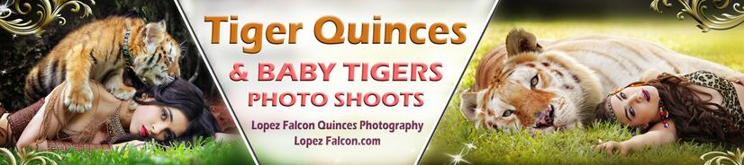 SWEET 15 QUINCEANERA PHOTO SHOOT WITH BABY TIGERS LOPEZ FALCON QUINCES WITH TIGERS
