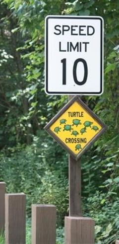 Helping Turtles Cross Roads