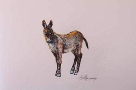 Sunny Burro, original colored pencil and ink drawing by Texas artist Lindy C Severns, Old Spanish Trail Studio, Fort Davis TX