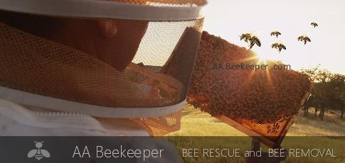 Lake Forest Bee Removal - Beekeeper