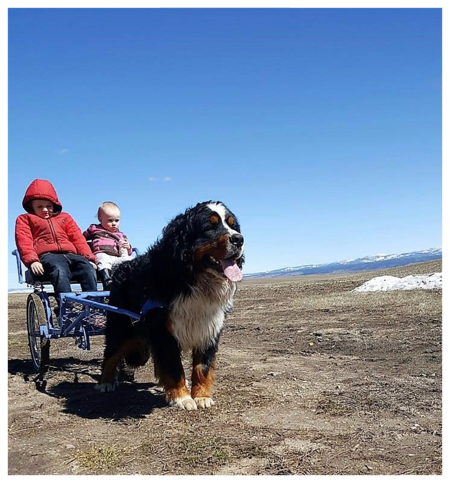 Bernese Mountain Dog Carriage