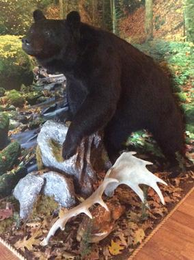 Foremost Frontier Hunting Lodge Bear