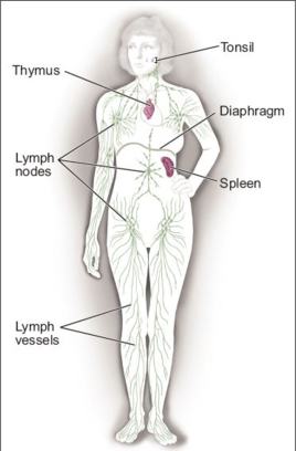 Lymphatic Cancer - Dr. Joel Wallach