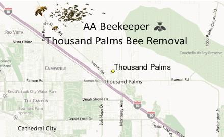 Thousand Palms bee removal