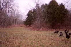 turkey hunting in kentucky