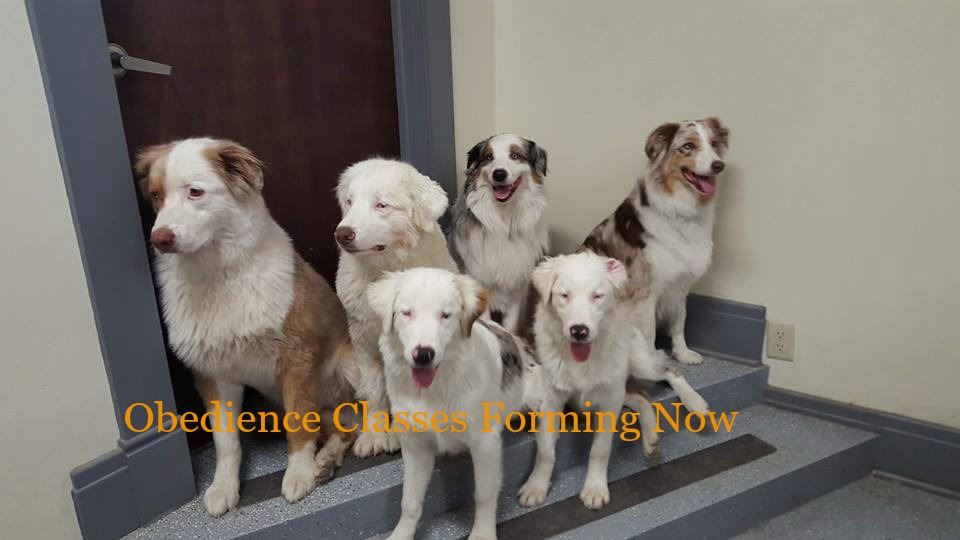 Dog Daycare And Dog Boarding Pet Grooming Pawprints By Penny Co