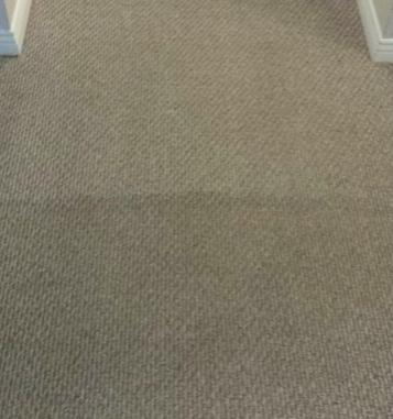 Photo of low pile carpet cleaning | Halifax