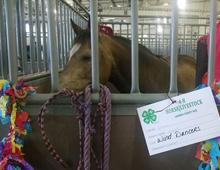 larimer county 4-H foundation memorial gifts